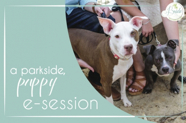 parkside-puppy-engagement-as-seen-on-hill-city-bride-wedding-blog-copy