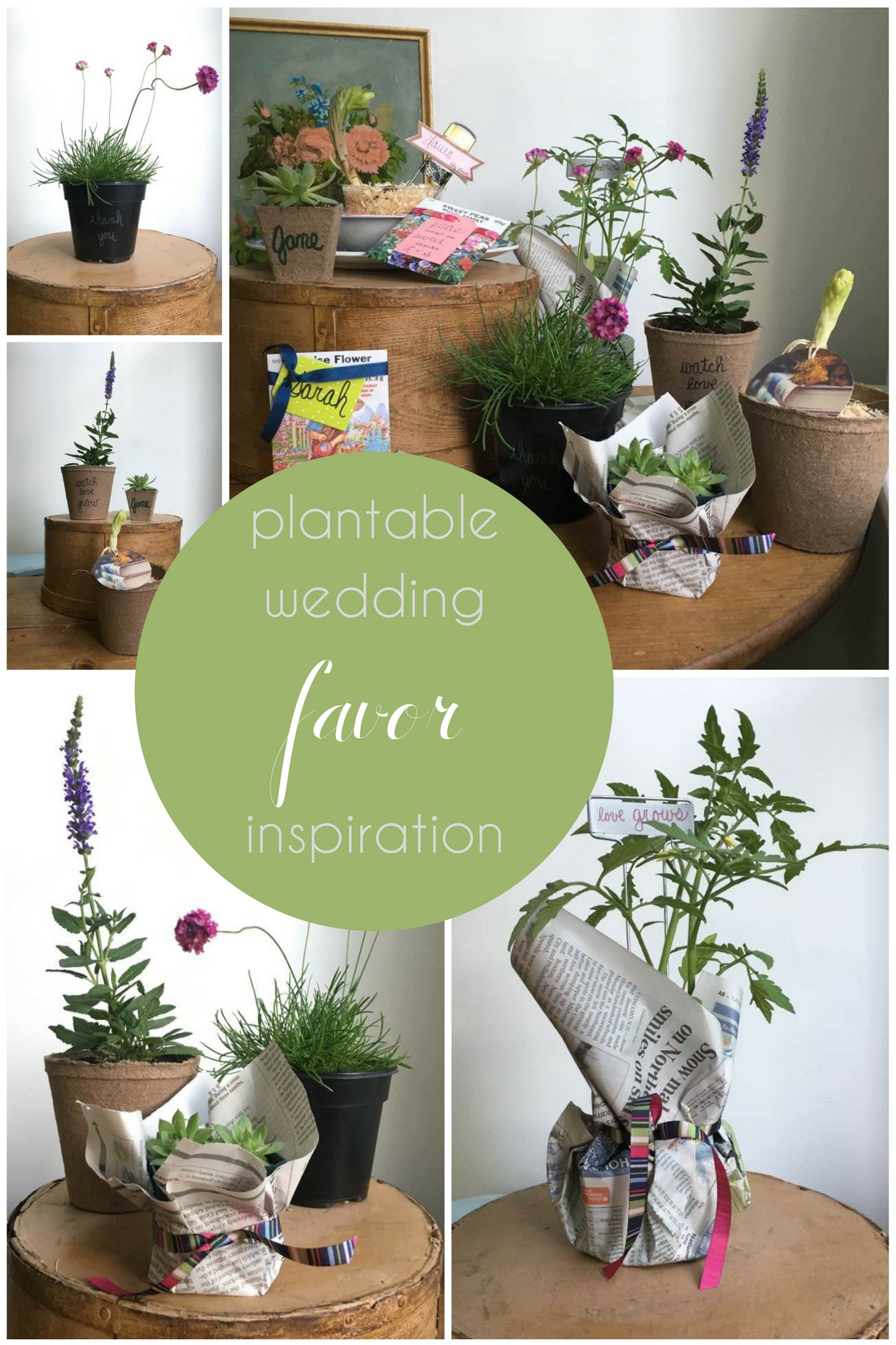 Plantable wedding favors - Plantable Wedding Favors Inspiration Hill City Bride Virginia Wedding Blog