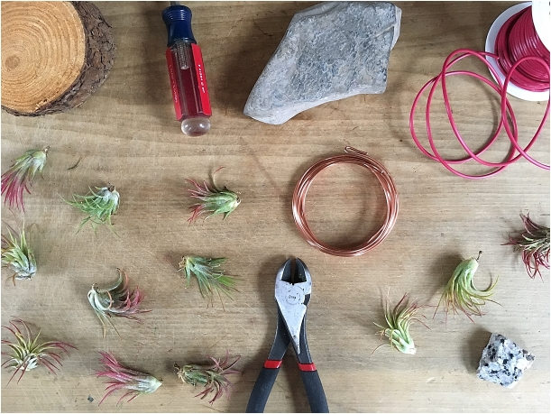 DIY Wire Air Plant Holders | Hill City Bride Virginia Wedding Blog