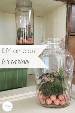 DIY Air Plant Terrarium| Hill City Bride Virginia Wedding Blog
