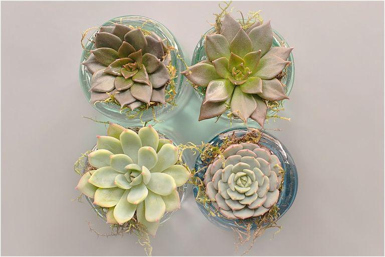 Charitable Wedding Ideas | Hill City Bride Virginia Weddings Blog | Succulents