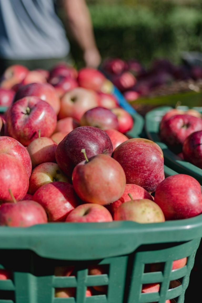Picking Apples in Virginia   Homemade Recipe