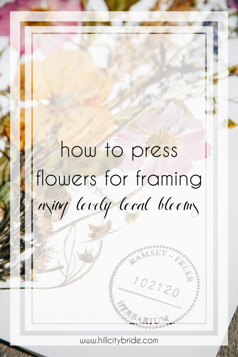 Learn How to Press Flowers for Framing Using Lovely Local Blooms