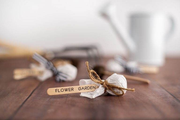 How to Make Simple DIY Seed Pops That Your Guests Will Love