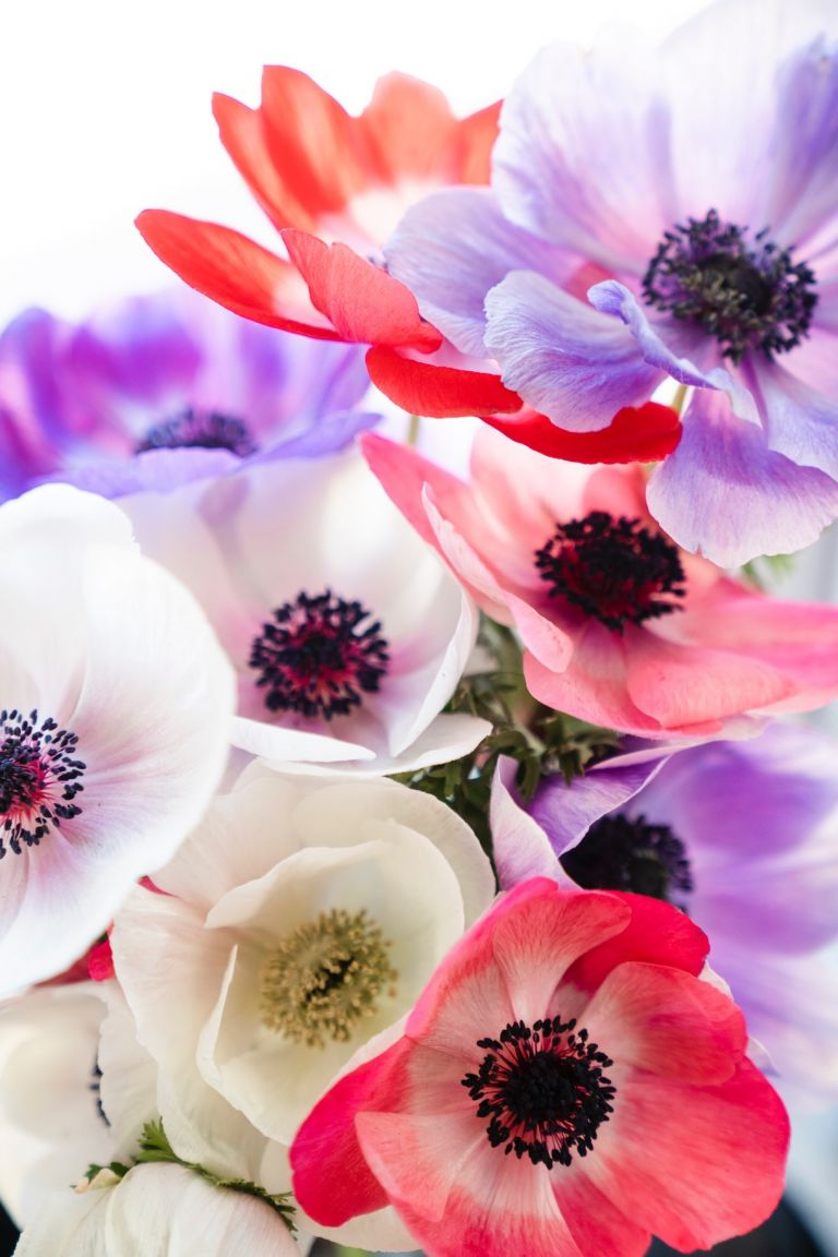 Colorful Anenomes for Weddings